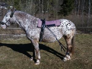 Der Biko® Pferdeexpander kann bei jedem Pferd angewendet werden.