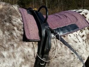 Die Safety Leine befreit das Pferd sofort von den elastischen Bändern